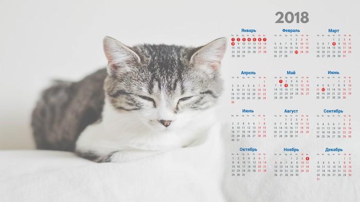 Для рабочего стола с котом